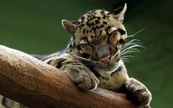 Snoozing Predator