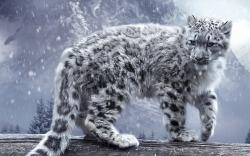 Animals Snow Leopard