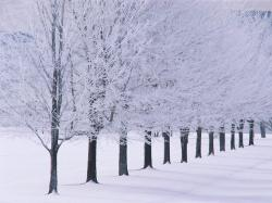 ... snow-wallpapers-snow-winter-trees-wallpaper-33998 winter_GA192 winter_trees_snow