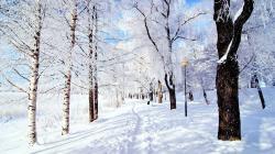 Description: The Wallpaper above is Park Snow Wallpaper in Resolution 2560x1440. Choose your Resolution and Download Park Snow Wallpaper