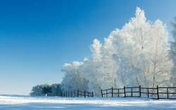 Snow Wallpaper Widescreen Hd Wallpapers Dekstop Label