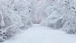 Beautiful Winter Snow Backgrounds