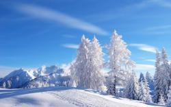 Beautiful Snowfall Wallpaper