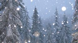 Snowflakes Falling Wallpaper