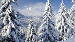 ... Snowy trees wallpaper 1920x1080 ...