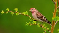 View And Download House Sparrow HD Wallpapers ...