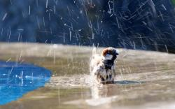 Sparrow Bird Water