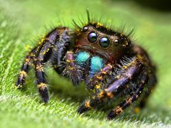 Spider | 1600 x 1200 | Download | Close