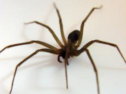 free Spider wallpaper wallpapers download