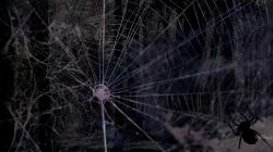 Spider web bac.