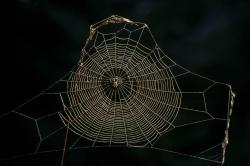 Delicate Spider Web Wallpaper