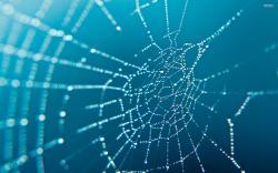 ... Spider Web wallpaper - 1061856 ...