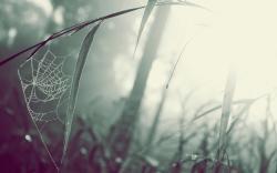 ... Spider Web Wallpaper ...