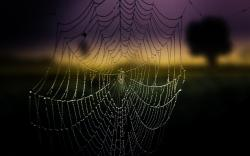Amazing Spider Web Wallpaper