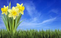 Background Spring Wallpapers Hd Widescreen Wallumi 1920x1200px