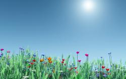 Spring Backgrounds 19091