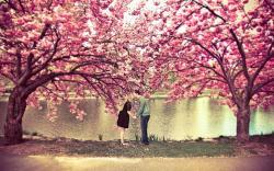 Spring blossom love kiss