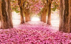 Spring blossom trees alley