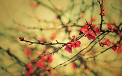 Spring Branches Buds Flowers Photo