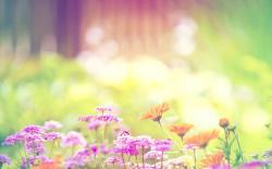 Spring flower bumblebee