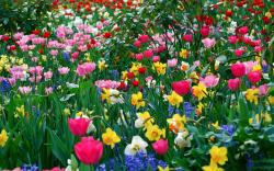 Funmozar Spring Flowers Wallpapers