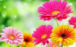 Image for Google Spring Flowers