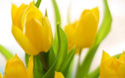 ... spring-flowers-hd-wallpapers ...