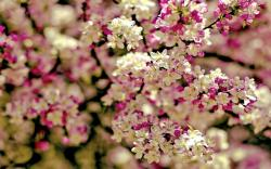 Spring Tree Flowers | 1920 x 1200 | Download | Close