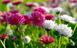 Spring Flowers; Spring Flowers ...