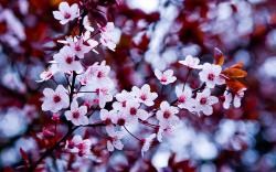 ... Spring Flowers Wallpaper ...