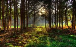 Gorgeous Spring Forest Wallpaper
