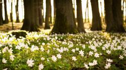 View Spring Forest Desktop Wallpaper ...