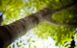 Spring Light Green Crown Tree Focus Nature