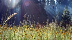 Pretty Spring Meadow Wallpaper