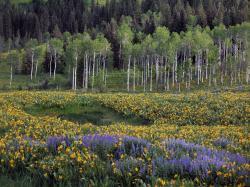 Spring Meadow, Caribou Mountains, ...