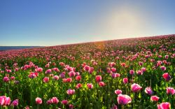 Lovely Spring Meadow