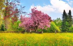 Spring nature scenery