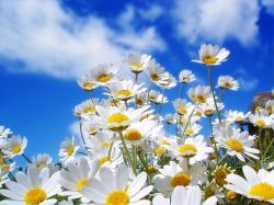 Spring Daisy - spring wallpaper 1024x768 1152x864 1280x1024 1600x1200