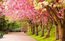 Spring Wallpaper Widescreen 14068