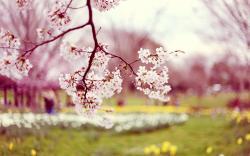 Spring Wallpaper