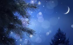 Spruce moon night