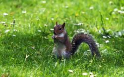 Squirrel grass