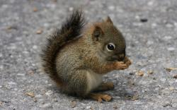 ... Squirrel #04 Image ...