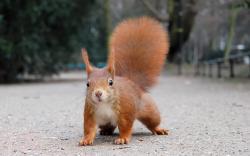Funny Squirrel Wallpaper 39782