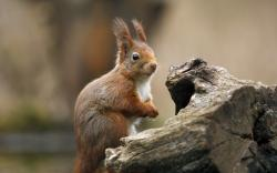 Cute Squirrel Wallpaper for iPhone