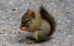 Cute Baby Squirrel Wallpaper 39781