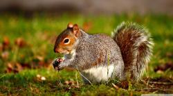 Squirrel Wallpaper 11