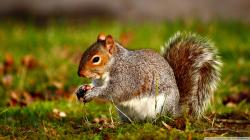 Squirrel Wallpaper 11