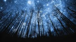 Starry Nights Wallpaper