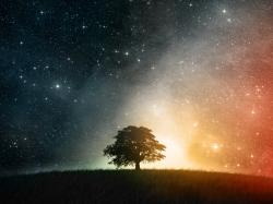 Trees at Night with Stars